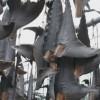 SankeiNews: Shark Fin Processing in Kesennuma, Japan