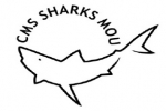 Countries Agree on Actions to Protect Sharks