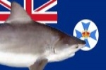 Shark attacks Queensland man's kayak