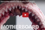 Surrounded: Island of the Sharks