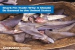 Shark Fin Trade: Why it Should Be Banned in the United States
