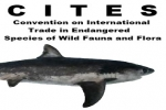 CITES controls over newly-listed shark species enter into force