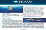 IFAW CITES Briefing Sheet – Sharks – 2016