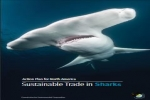 Sustainable Trade in Sharks: Action Plan for North America
