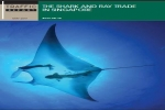 The Shark and Ray Trade in Singapore