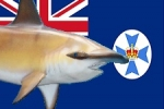 Queensland: Improved protection for hammerhead sharks