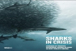WildAid: Sharks in Crisis