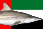 UAE Bans Shark Fishing from 1st February to 30th June