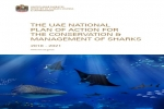 UAE announces new Shark Protection Plan