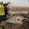 France: Over 400 sharks killed in ghost net