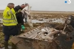 France: Over 400 sharks killed in ghost net