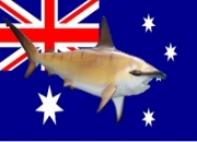 Protection removed for endangered Hammerhead sharks in Great Barrier Reef