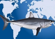 Industrialised fishing overlaps threatened shark hotspots worldwide
