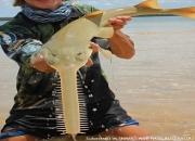 You saw sawfish!