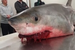 RNZ News: DOC defends fisherman slammed by public for accidental shark catch