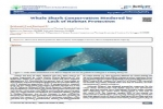 Whale Shark Conservation Hindered by Lack of Habitat Protection