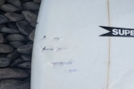 Surfer Suffers Non-Life Threating Injuries after Shark Bite