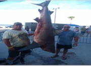 New Bull Shark Record Certified in Mississippi