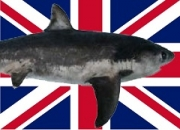 UK Government to introduce world-leading ban on shark fin trade