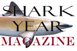 Basking sharks exhibit different diving behavior depending on the season