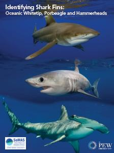 Shark Identification Chart | Car Interior Design