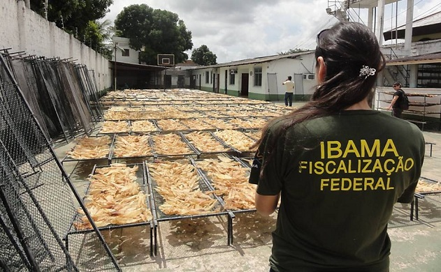 Seizure of almost 8 tons of Shark Fins in Brazil