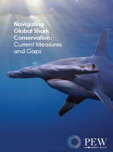 shark conservation essay Friday essay: the meg is a horror story but our treatment of sharks is  peter  benchley to devote himself to shark conservation for the rest of.
