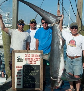 Harbor Thesher shark 216lb 2013