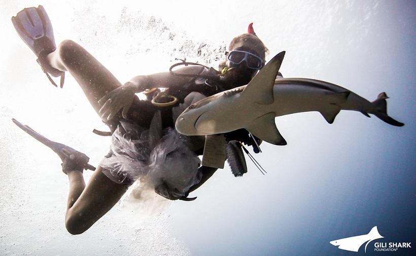 bali shark release aug13