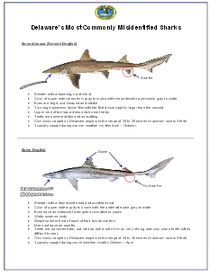 pdf_Delaware's Most Commonly Misidentified Sharks