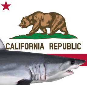 Flag_of_California_shark2