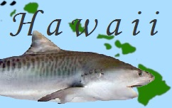 hawaii_shark1