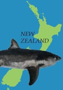 NZ_shark2
