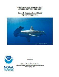 pdf_NOAA scalloped hammerhead